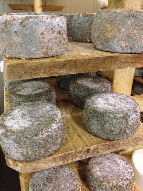 Azienda Agricola Borg da Ocjs - Cheese room vertical