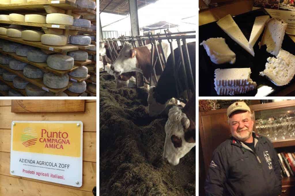 Azienda Agricola Borg da Ocjs - Cows