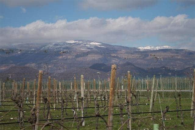 Friuli, Vineyard and Mountain View