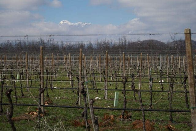 Friuli Vineyard & Mountain View