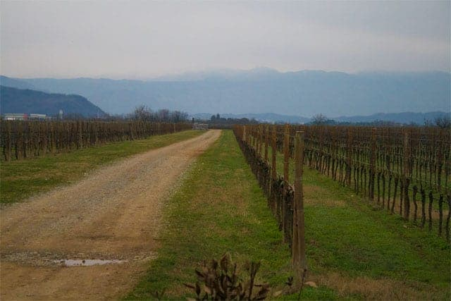 Friuli vineyard and mountain view