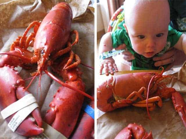 Lobster, the Real Deal