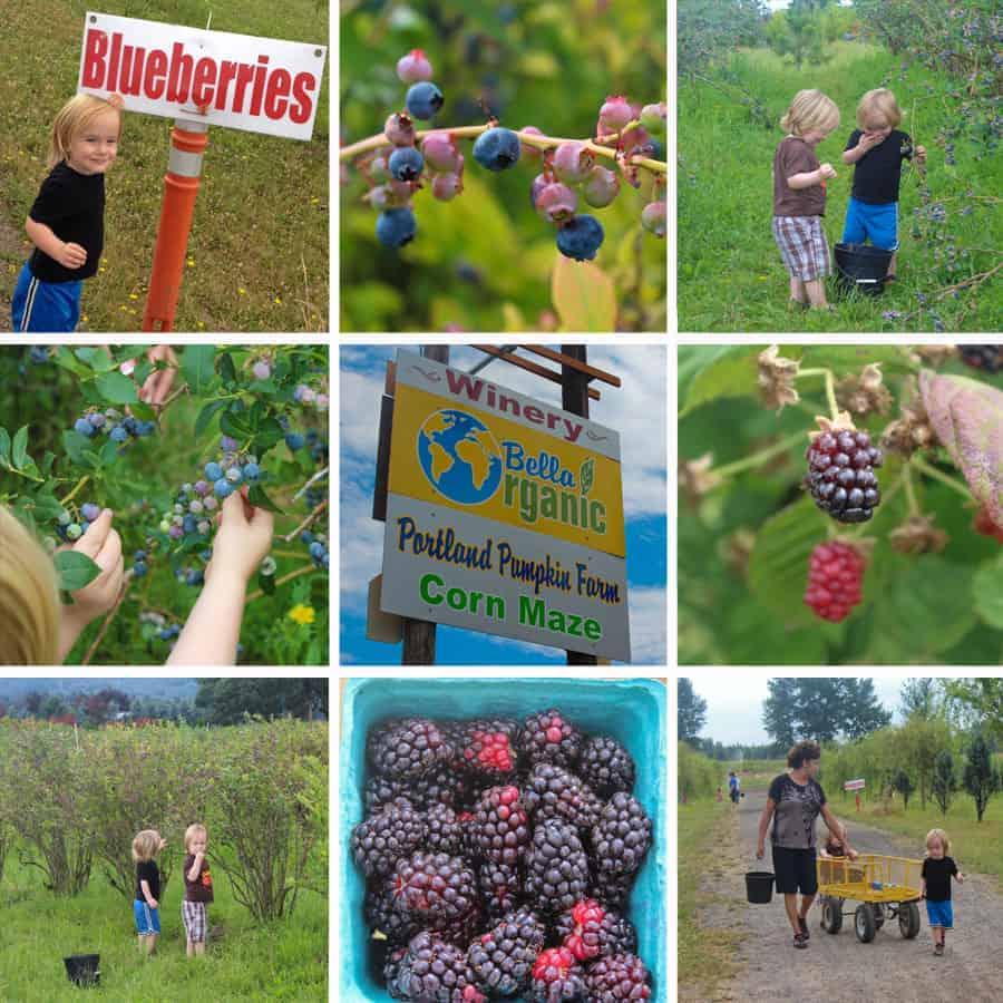 Berry Picking, Bella Organics, photo collage