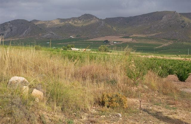Vineyard in Jumilla, Murcia, Spain