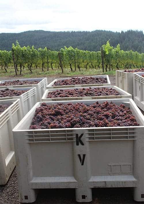 Kramer Oenocamp_grape bins vertical