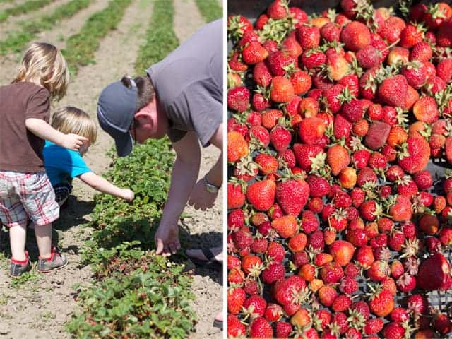 Going Strawberry Picking