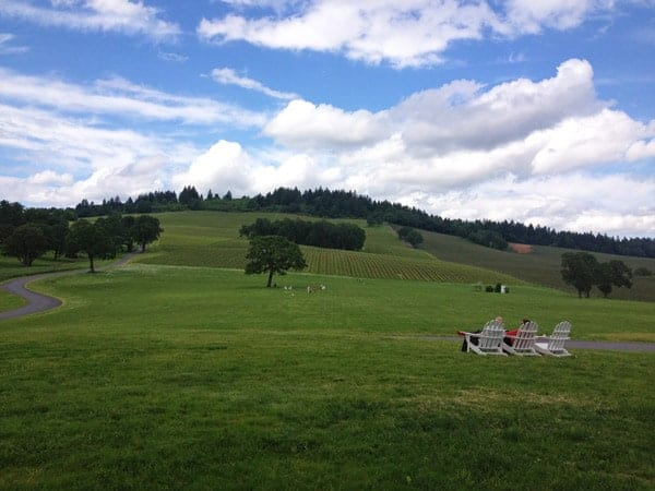 View from Stoller Vineyards