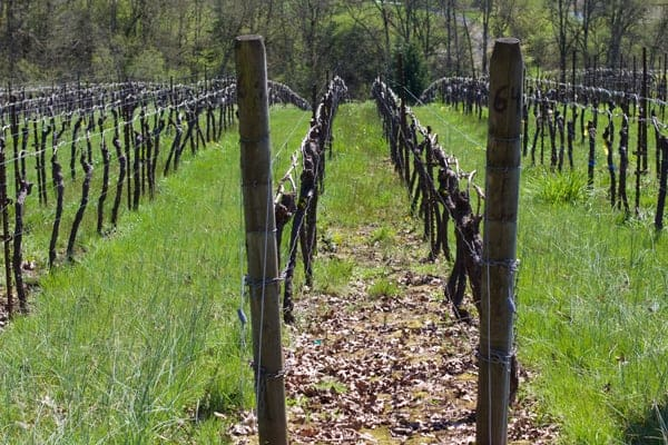 Stag-Hollow-Vineyard