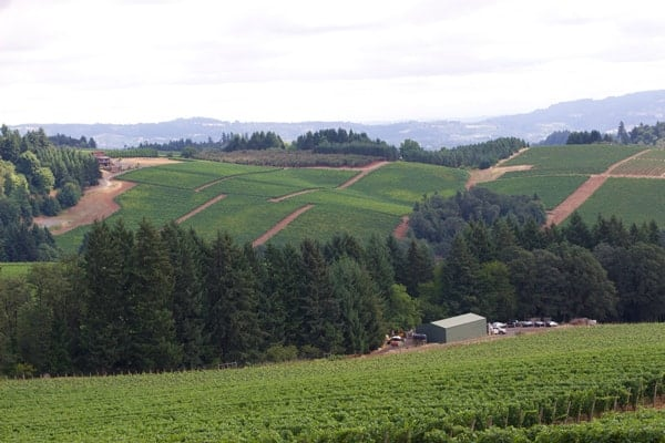 View from Knudsen Vineyards
