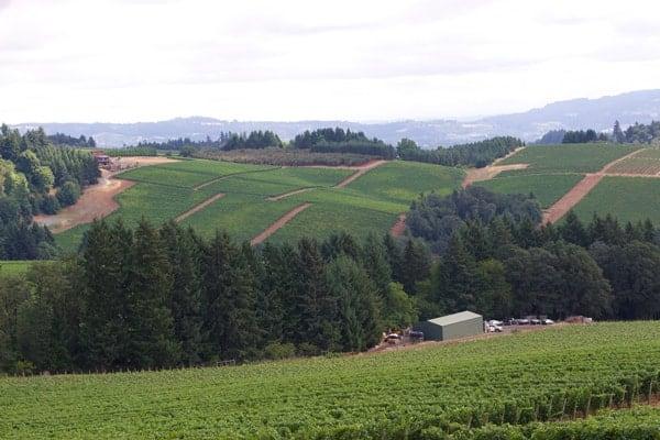 View from Knudsen Vineyards