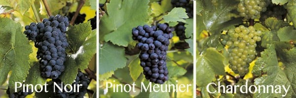Permitted Grapes in Champagne