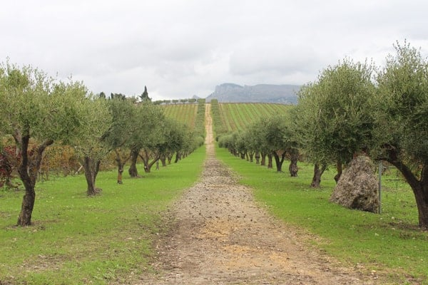 Donnafugata Vineyard, Sicily, Italy