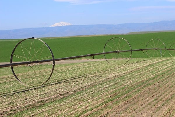 Farm in Yakima Valley