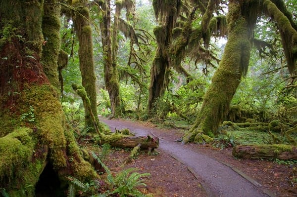 Olympic National Park, via Wikipedia