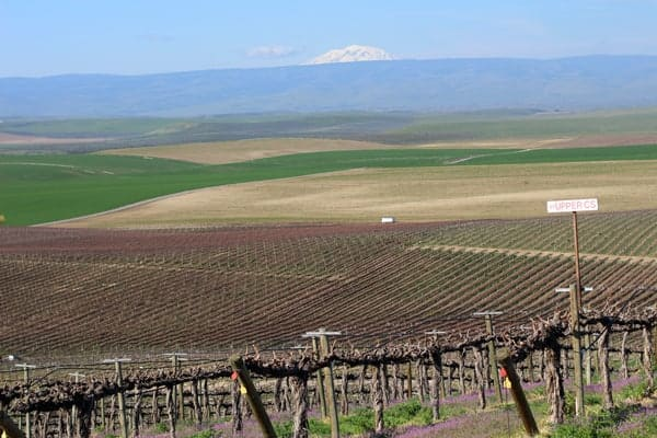 View from Red Willow Vineyard, Yakima Valley