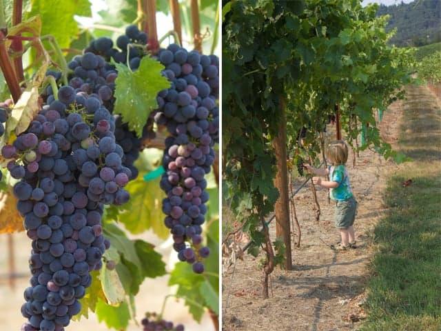 Visiting Oregon Wineries