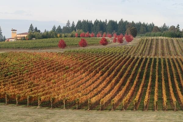 Fall at Domaine Serene Winery