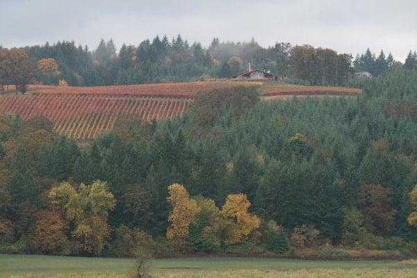 Fall at Penner Ash Vineyards