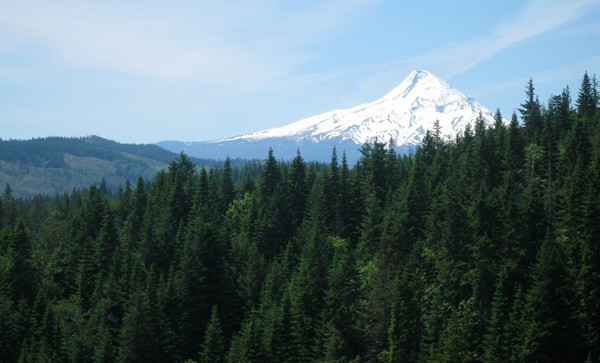 View from Phelps Creek Vineyard