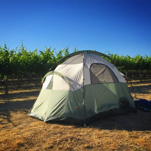 Camping in the Vineyard