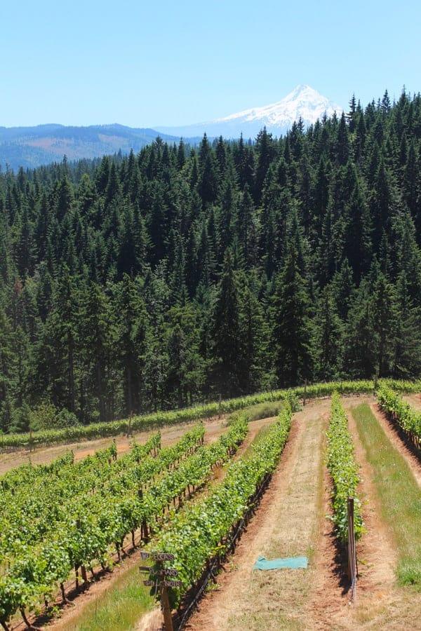 Phelps Creek Vineyard