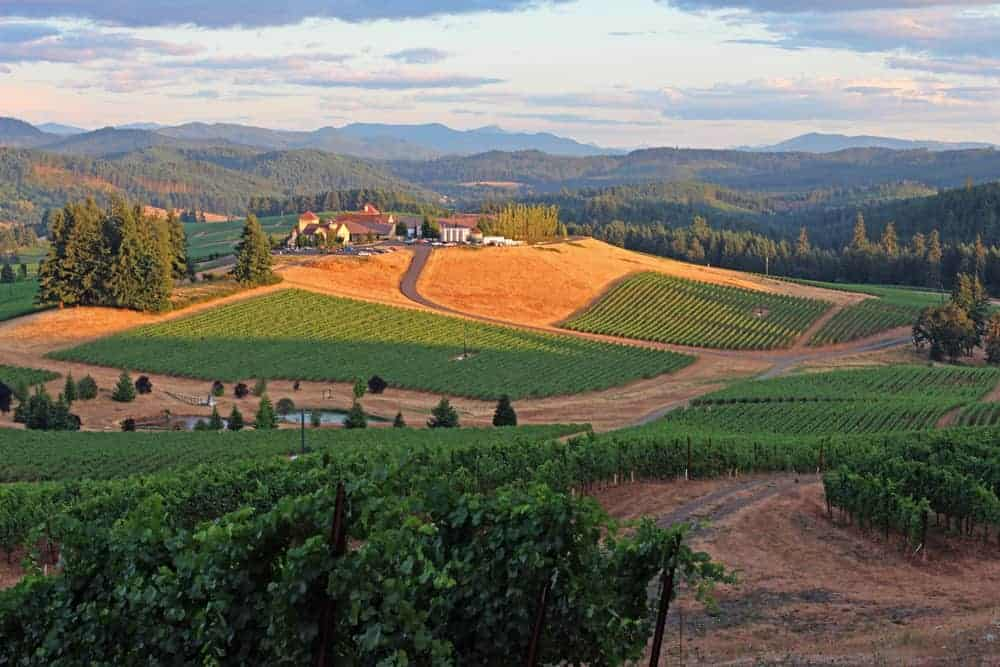 Vineyard in the Willamette Valley with vines on sloping hills.