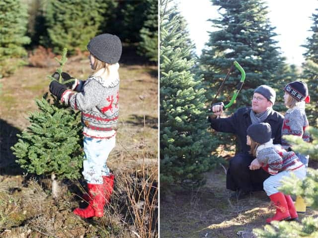 The-holiday-season.-Cutting-down-our-own-tree