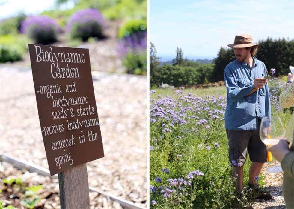 Biodynamic Garden Tour at Brooks Vineyard