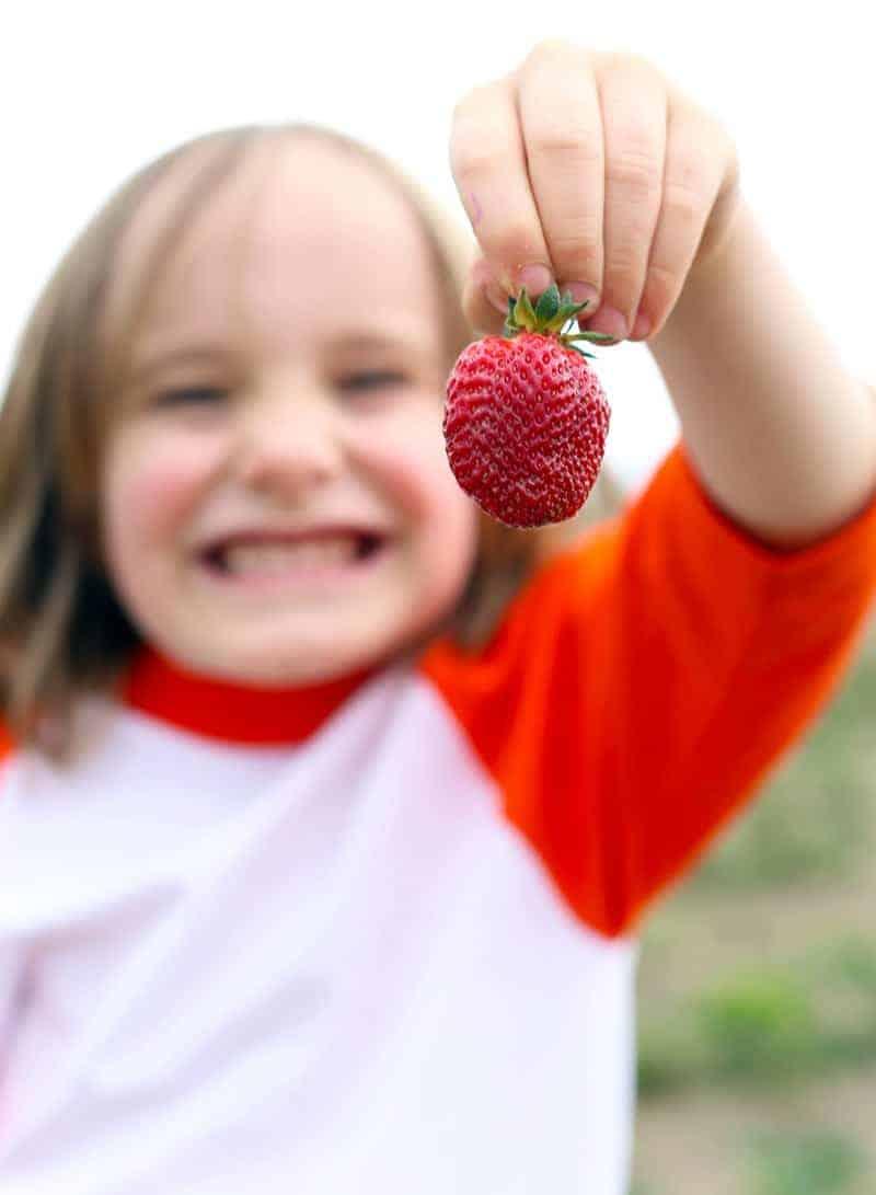 Berry-Picking-on-Sauvie-Island