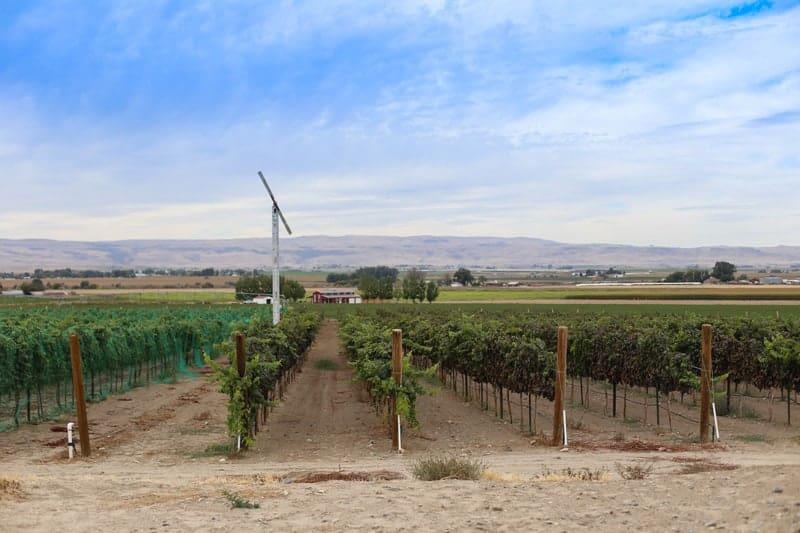 Idaho Wine Country