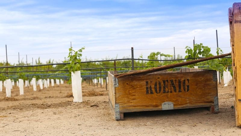 Koenig Vineyard, Idaho