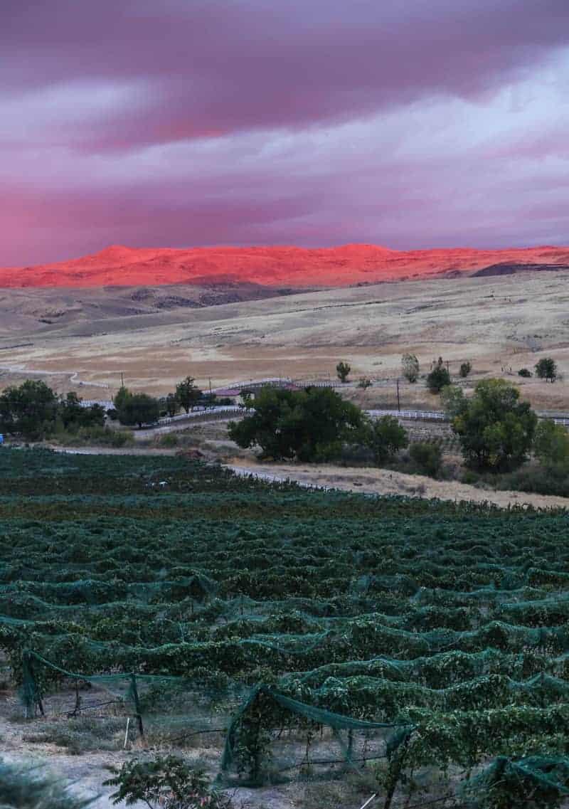 Sunset at 3 Horse Ranch Vineyard, Idaho Wine Country