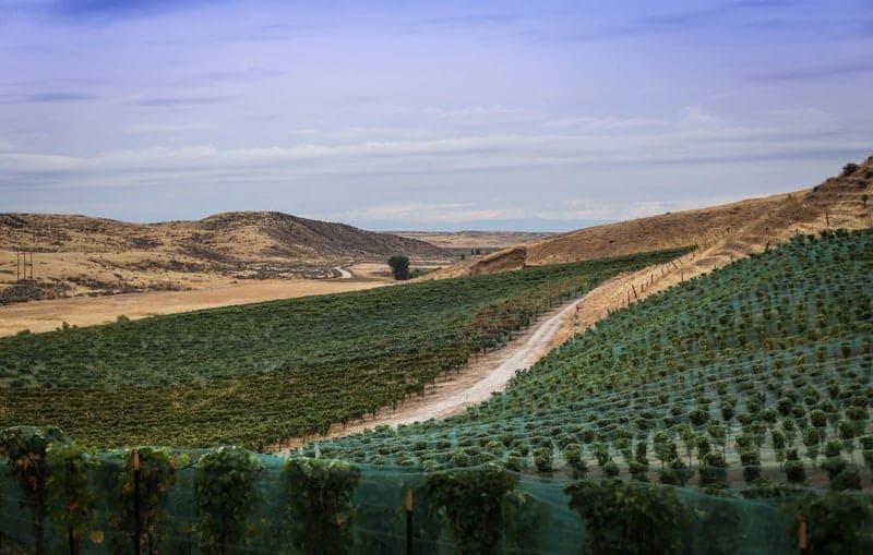 Vineyards in Idaho