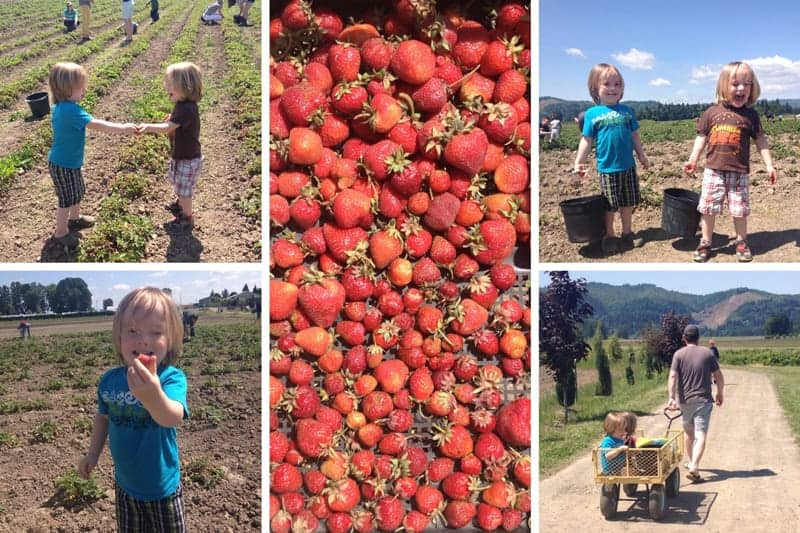 Berry Picking with Kids in Sauvie Island, Portland, Oregon