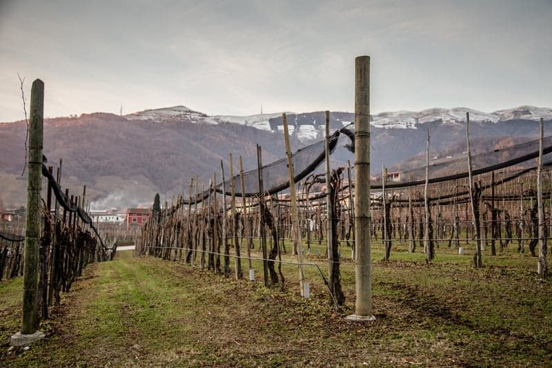 Vineyards in Conegliano Valdobbiadene in the Veneto wine region of Italy