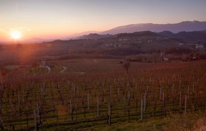 Sunset on a vineyard in the Conegliano Valdobbiadene Prosecco DOCG region.