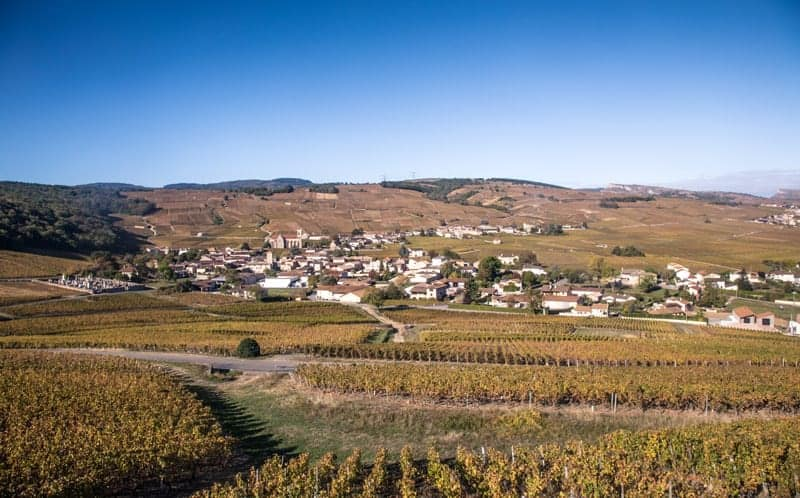Vineyards near Pouilly-Fuissé