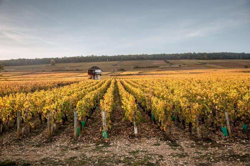 Vineyards in Burgundy France