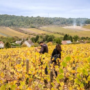 Back to Bourgogne: An introduction to Burgundy wines