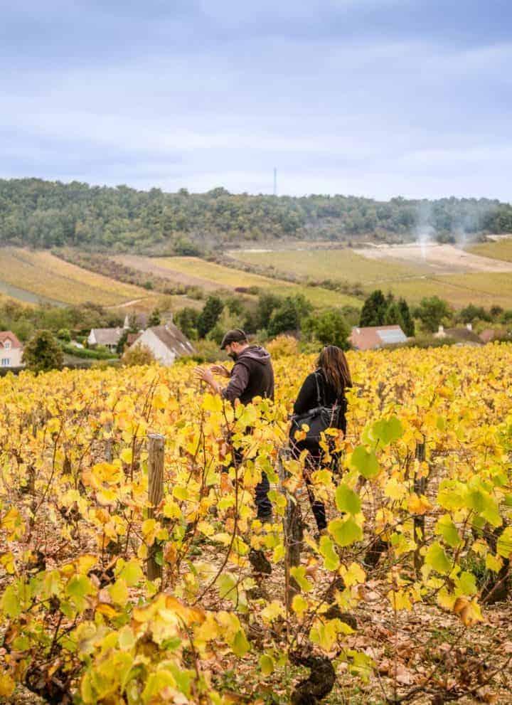 Vineyard in Burgundy France