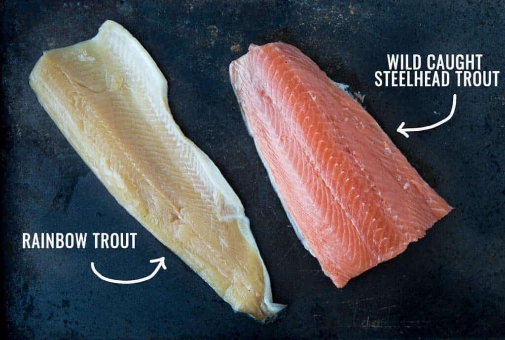 Difference between Steelhead Trout and Rainbow Trout