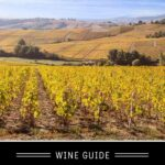 Chardonnay Wine Guide Pinterest Pin