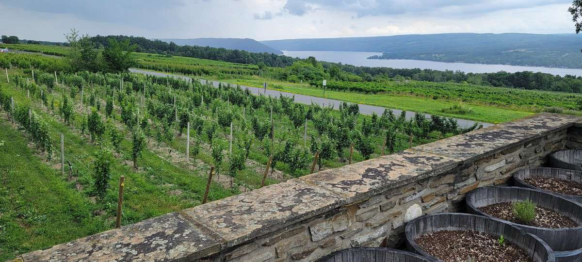 Finger Lakes Wine Region vineyards photo of Keuka Lake at Dr. Konstantin Frank.