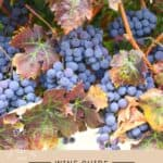 Sangiovese Wine Guide Pin